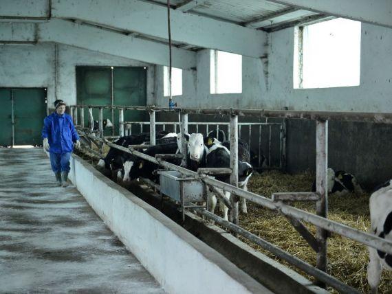 Ministrul Agriculturii:  Cresterea vacilor pentru carne este o afacere buna in Romania