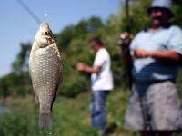 PE: Pescarii nu vor mai avea voie sa arunce prada inapoi in apa