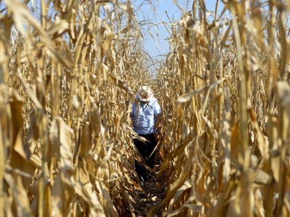 Institutiile financiare nebancare vor putea cofinanta proiectele din agricultura cu fonduri europene