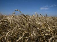 Cel mai secetos decembrie din ultimii 41 de ani va scumpi orzul si graul. Caldura din ultima vreme pune in pericol si pomii fructiferi
