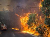 Australia, afectata de canicula, se pregateste sa infrunte cele mai violente incendii din ultimii 5 ani