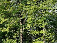 Padurile Romaniei, scoase la mezat de americani. Universitatea Harvard vinde 32.000 de hectare detinute in tara noastra. Statul a pierdut dreptul de a le rascumpara