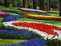 Cea mai mare gradina de flori din lume, parcul Keukenhof din Olanda, deschisa pentru public