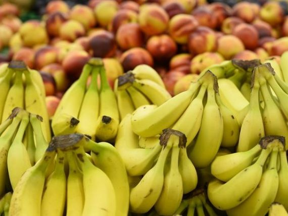Productia mondiala de banane, evaluata la 9 mld. dolari, pusa in pericol de extinderea unei ciuperci din Asia