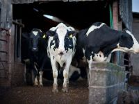 Investitii in zootehnie. Subventiile mai mari si exporturile catre China incurajeaza romanii sa devina fermieri