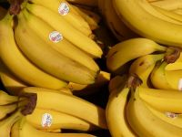 Soi de banane modificate genetic, cu o concentratie mare de vitamina A, testat in SUA