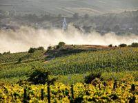 Ghidul unei vacante prin podgoriile din Romania. De ce cred somelierii ca ne putem compara cu vinurile de Bordeaux