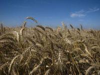 UE a devenit, anul trecut, cel mai mare exportator de produse agroalimentare din lume. Cele mai puternice cresteri, catre Orientul Mijlociu si Africa de Nord
