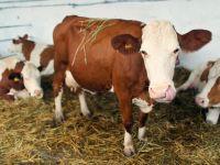 Ponta: Europa spune ca nu avem probleme cu carnea de vita, poate gresesc autoritatile din Rusia