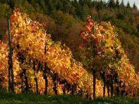 Povestea vinului, depanata pe malurile Dunarii. Podgoriile Dobrogei, care concureaza cu cele din Franta sau Italia, tot mai cautate pentru turism viticol