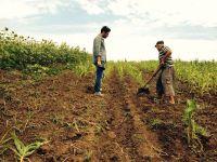 Romania, te iubesc : Noi vrem pamant muncit! In tara numita bdquo;granarul Europei , 93% din agricultori abia traiesc din ce cultiva