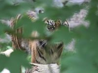 Senzatii tari pentru cine nu e slab de inima. Cat te costa sa te plimbi cu tigrii in Bangkok sau sa inoti cu rechinii, in Bahamas