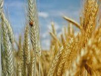 Traderul german de cereale BayWa negociaza preluarea unor facilitati in Portul Constanta. Romania, al treilea mare exportator de grau din UE, dupa Franta si Germania