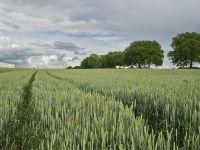 Seceta si reducerea TVA la alimente, contraste in agricultura anului 2015. Provocarile pentru 2016