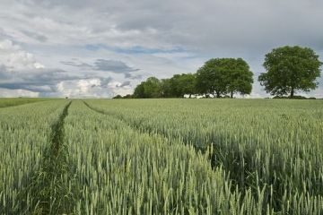 Romania va pune restrictii la vanzarea terenurilor agricole, dupa ce aproape jumatate din pamantul Romaniei a ajuns sa fie controlat de straini