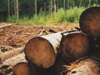 """România, în procedură de infringement pentru defrișările ilegale. CE: """"Inconsecvenţele din lege nu permit autorităţilor să verifice cantităţi mari de lemn recoltat ilegal"""""""