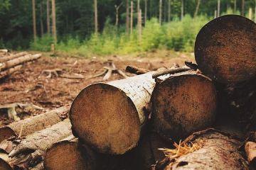 România, în procedură de infringement pentru defrișările ilegale. CE:  Inconsecvenţele din lege nu permit autorităţilor să verifice cantităţi mari de lemn recoltat ilegal
