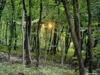 In Romania se taie ilegal, anual, 8,8 milioane metri cubi de padure. Ce este Garda Forestiera, care va functiona de la 1 septembrie