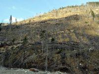 Romania, in cea mai grava criza a padurilor din ultimii 25 de ani. Judetele din topul Greenpeace al defrisarilor ilegale