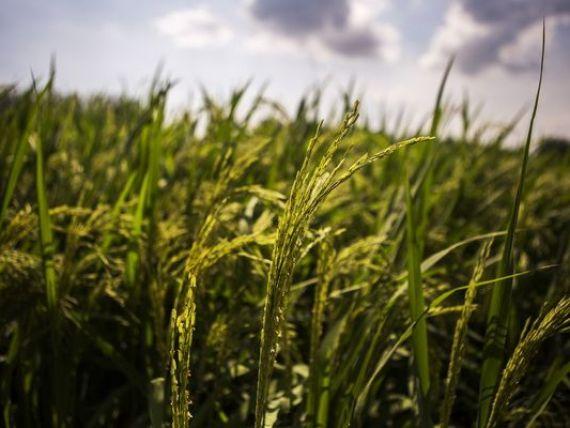 Miscarea controversata ce va da o lovitura grea pietei mondiale a zaharului: India vrea sa elibereze milioane de tone la nivel international. Cu cat va scadea pretul