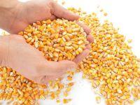 Cel mai mare exportator de cereale din lume cumpara porumb din Romania. De ce au dublat SUA importurile de produse de la noi