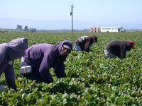 Peste 2.000 de locuri de muncă pentru români în Europa. Spania caută 1.000 de agricultori, iar Olanda angajează muncitori în sere