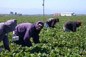 Germania relaxează controalele la frontieră pentru lucrătorii agricoli străini, care să ajute la recoltatul fructelor și legumelor, în plină pandemie