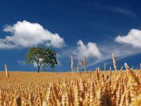 Din nou  granarul Europei . Ciolos: Romania ar putea juca un rol important in constituirea unei piete regionale de cereale