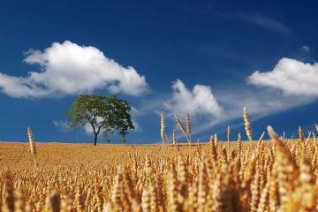 Desi detine una dintre cele mai mari suprafete agrare din UE, Romania a importat anul trecut mai multe alimente decat a exportat. Ce am cumparat de la straini