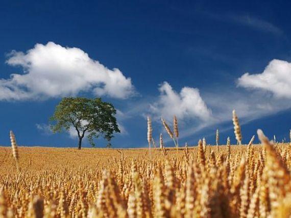 Alimentele din toata lumea pleaca din Europa. UE ramane cel mai mare exportator de produse agricole la nivel global