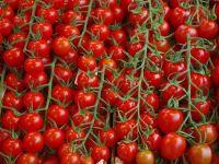 """Programul """"Roșia românească"""" va continua și în 2019. Câți bani primesc fermierii de la stat pentru culturile de tomate"""