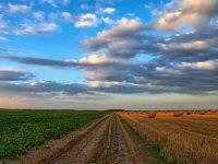 Tarile arabe, interesate sa cumpere produse alimentare din Romania. Guvernul trimite atasati agricoli in statele cu potential de export