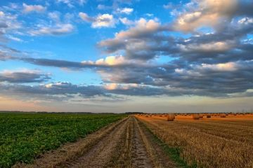 Tranzacţiile cu terenuri agricole au atins un nivel record, anul trecut. Zona în care un hectar a ajuns 12.000 euro