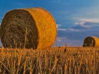 Romania redevine granarul Europei. Fermierii estimeaza, in 2017, o recolta mai mare ca cea de anul trecut, care a fost record