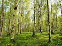 Carrefour, Marks & Spencer, Nestlé si Unilever investesc in salvarea padurilor din Norvegia. Guvernul de la Oslo lanseaza un fond de 100 mil. dolari