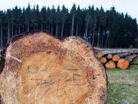 Greenpeace: România pierde 3 hectare de pădure pe oră. Reacția ROMSILVA