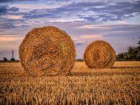 Agricultura românească, la mila cerului. Adevărul din spatele recoltelor record anunțate de Guvern în acest an