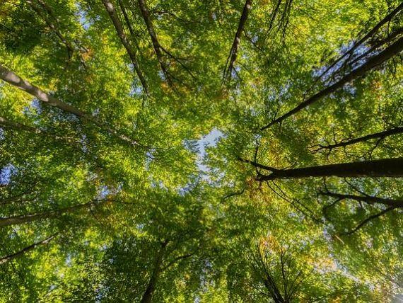 Marea Britanie își creează de la zero o pădure de 200 km. Peste 50 de milioane de copaci urmează să fie plantaţi, începând din martie