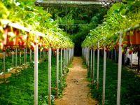 Spaniolii angajează români în agricultură. Ce salarii oferă
