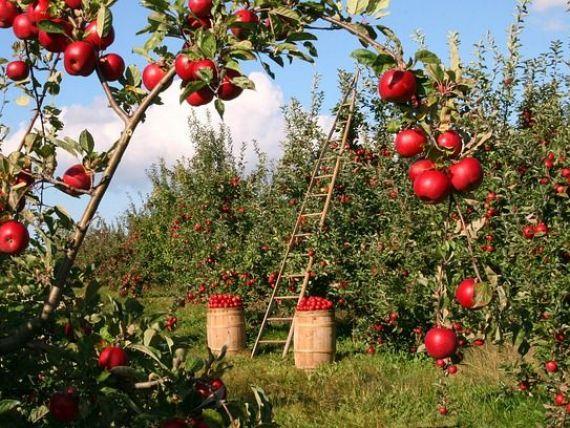 România deține o treime din fermele agricole din UE, dar produce doar 3,4% din cantitatea de legume și fructe la nivel european
