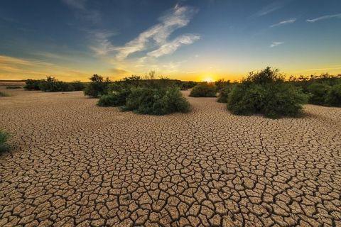 Arșița, mai periculoasă ca pandemia în Europa de Est. Bloomberg: Cea mai gravă secetă din ultimul secol lovește în plin România, al doilea exportator de grâu din UE