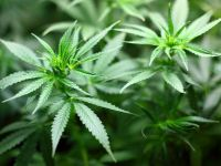 Oamenii pe care marijuana i-a făcut miliardari, legal