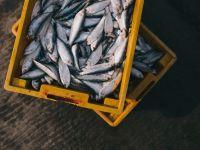 Scandalul peștelui contaminat cu plumb sau mercur. Cum au ajuns sute de tone în România
