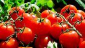 Roşiile româneşti se vor scumpi în sezonul rece. De ce renunță Ministerul Agriculturii la programul  Tomata