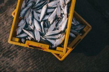 Inspectorul Pro: Cum ajungem să consumăm pește contaminat cu metale grele, pe care alte țări îl refuză