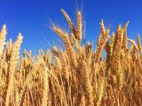 """Teodorovici propune achiziționarea de către stat a recoltelor de cereale de la fermier """"la prețul corect"""". """"Cândva o sa fiu un fermier de succes al acestei ţări"""""""