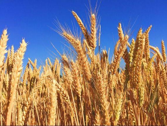 Teodorovici propune achiziționarea de către stat a recoltelor de cereale de la fermier  la prețul corect .  Cândva o sa fiu un fermier de succes al acestei ţări