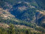 Analiză: Pădurile României, un business de peste 2,5 miliarde de euro. În fiecare oră, dispar peste 3 hectare