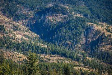 Sancțiuni de la UE pentru defrisări și poluare. Cum a dispărut o pădure de dimensiunea Bruxelles-ului în Maramureș