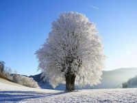 Minime și maxime meteorologice în luna decembrie. Anul în care s-a ajuns la -34,5 ordm;C
